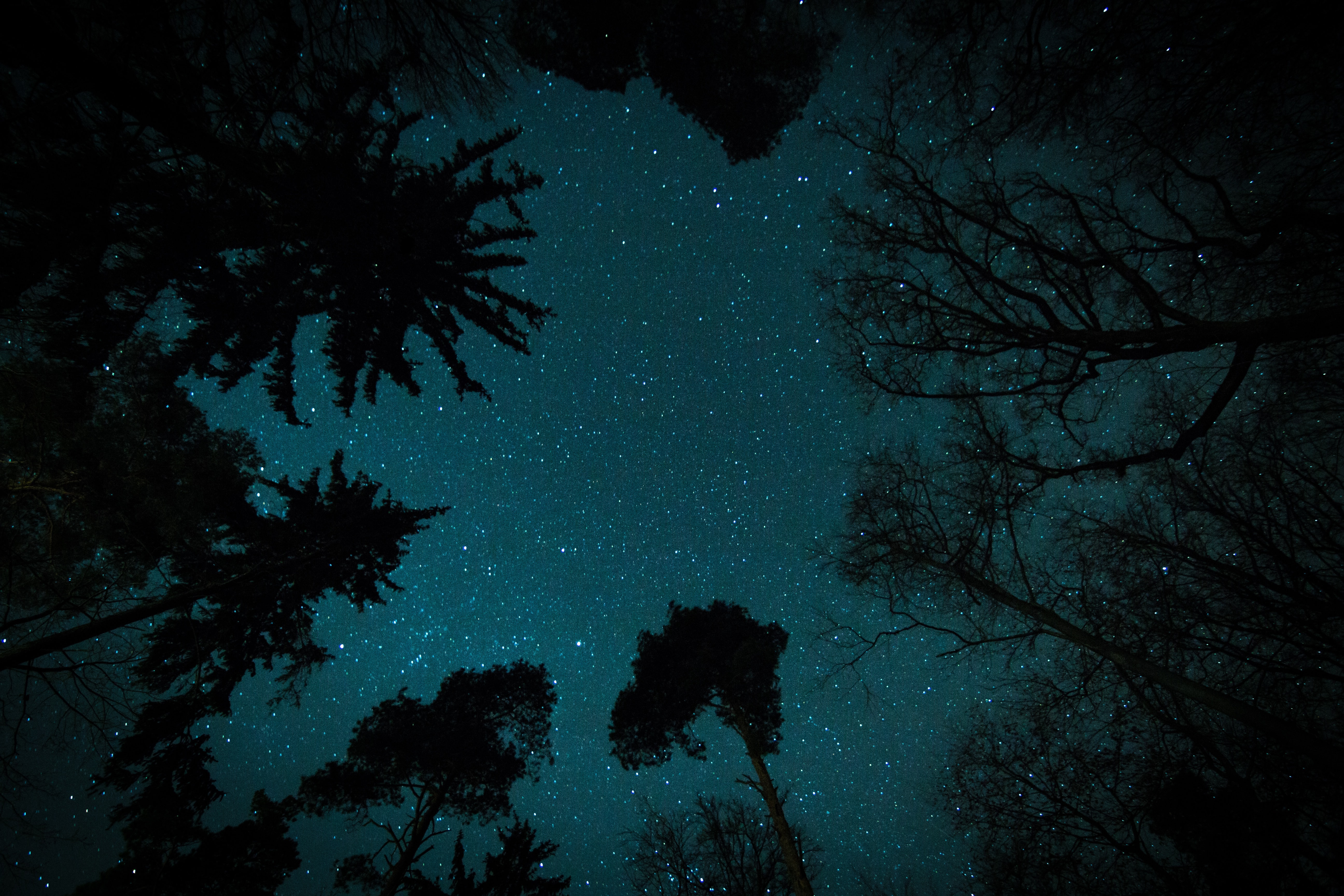 A view of the starry sky at night, straight up, through the silhouette of trees around the edges.