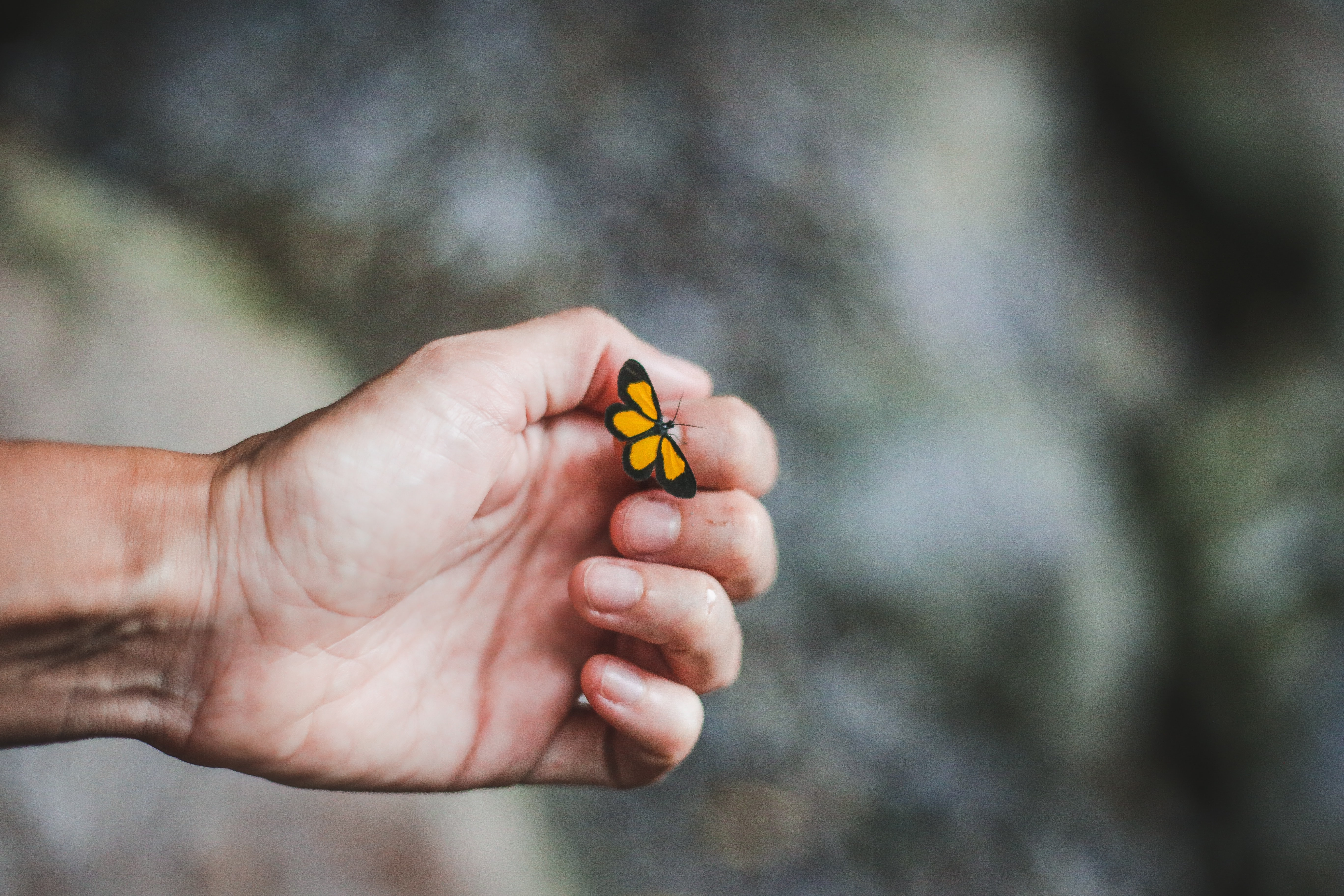 An outstreched hand and wrist, figers lightly curled, on which rests a vibrant yellow moth or butterfly.
