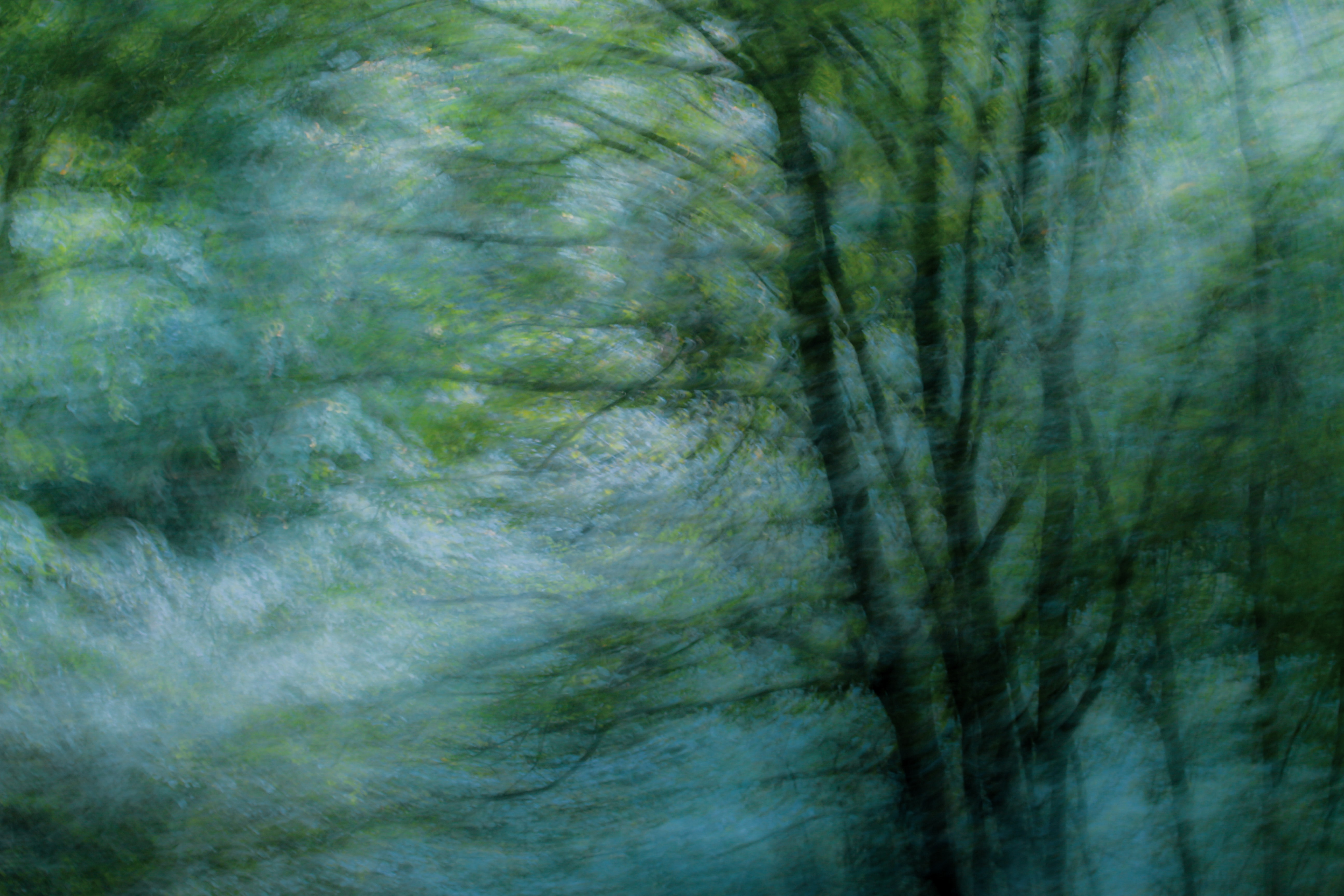 A blurred photo of a leafy tree against a blue sky, as if a breeze were blowing through the entire photo.
