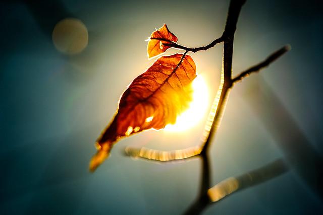 Autumn_leaf_on_branch