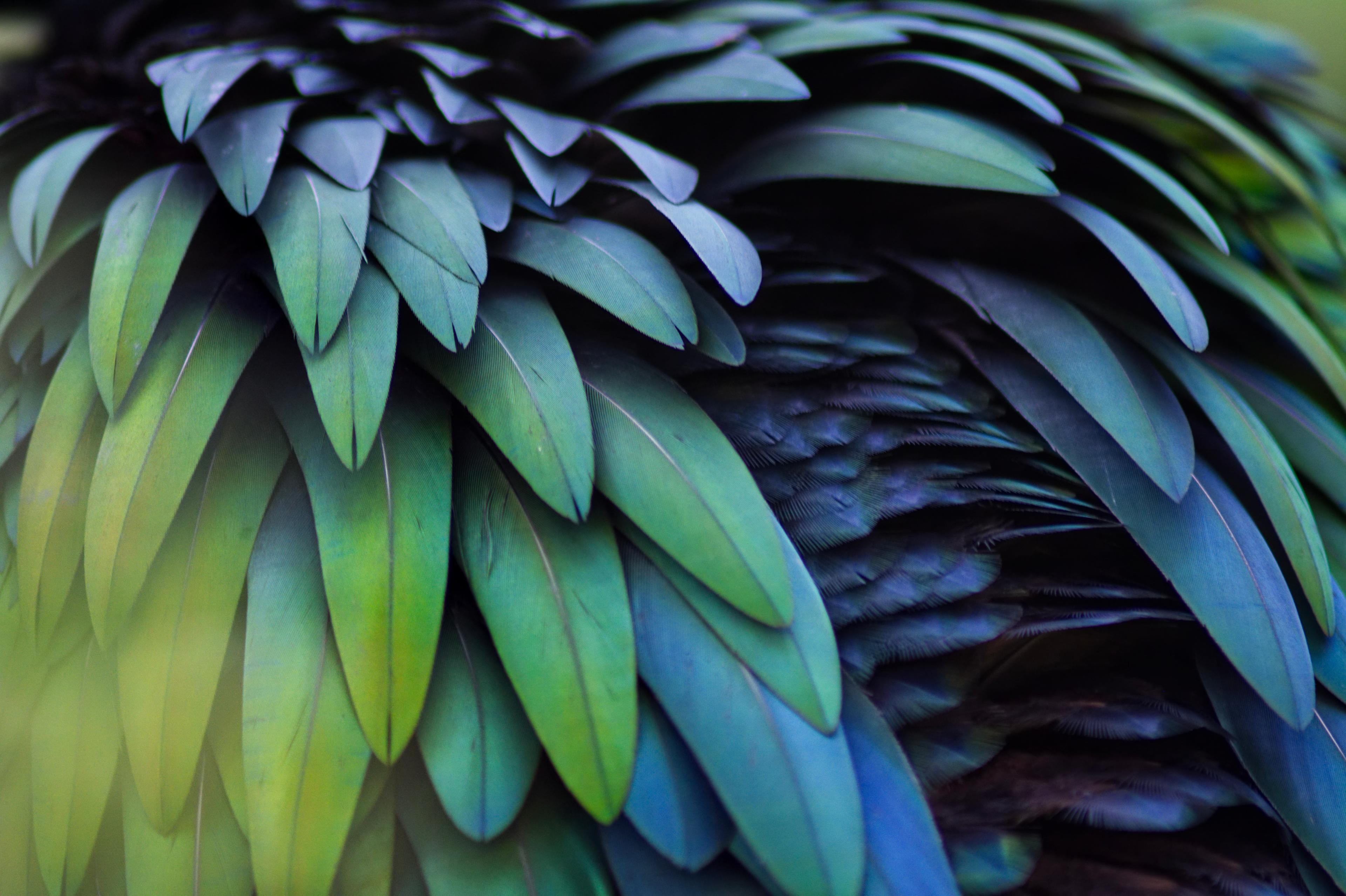 A close-up of irridescent green, blue, and teal bird feathers.