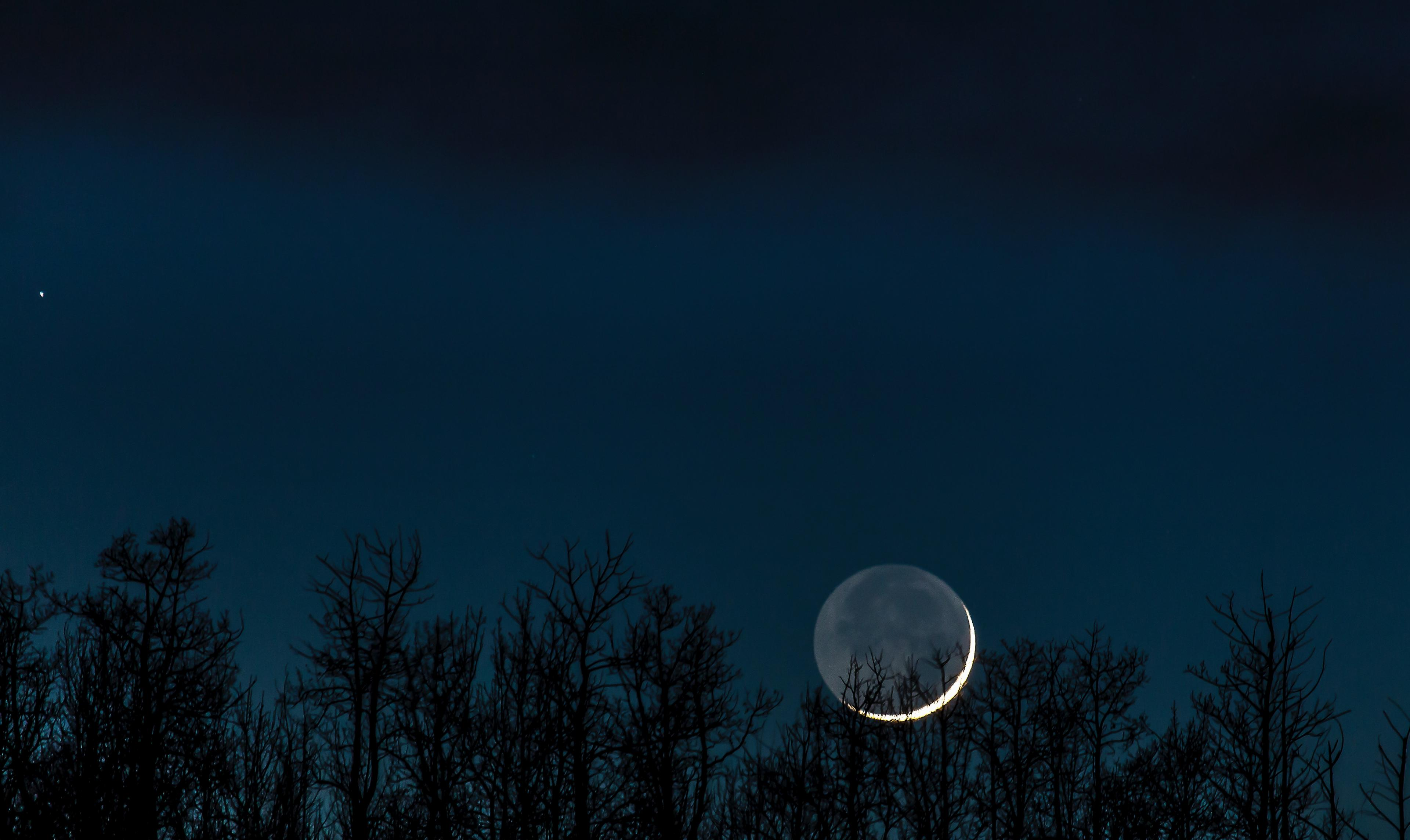 A crescent moon in the dark silhouette of evergreen trees, against a deep blue night sky