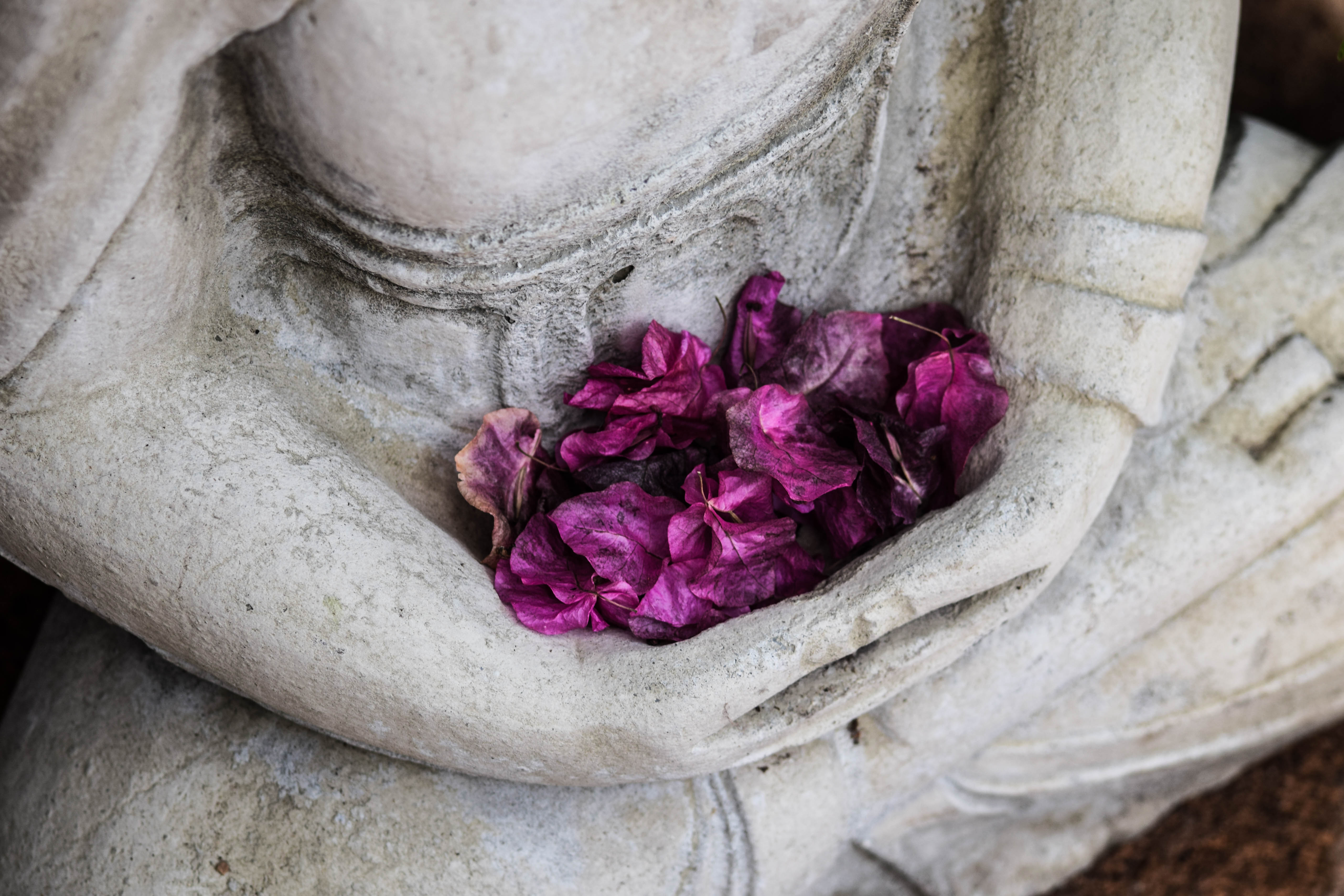 A pile of bright fuschia flower blossoms rest in the open hands and lap of a stone Buddha or Quan Yin statue