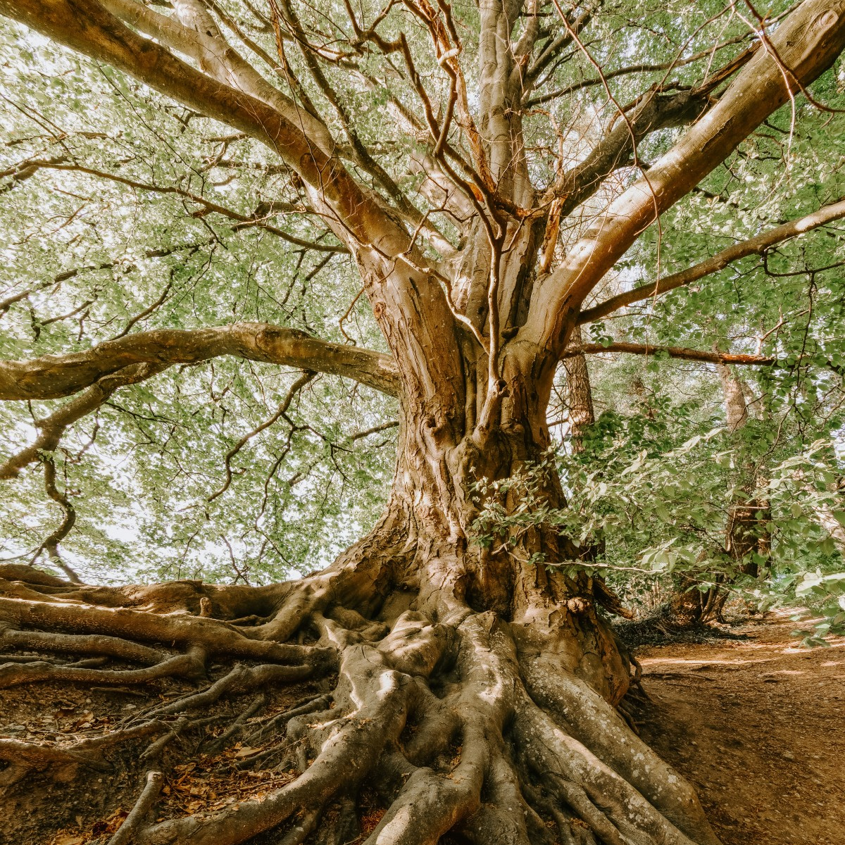 Majestic Tree with strong roots
