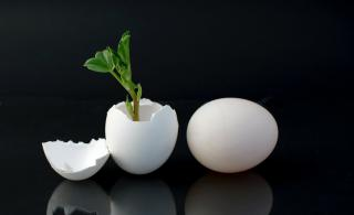 Against a black background, a white egg rests on its side. A second egg, standing on its end, has had its top removed and green sprout grows out of the egg.