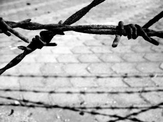A black and white photo of barbed wire and shadow.