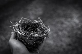 A small bird's nest is held in a human hand (black and white photo)