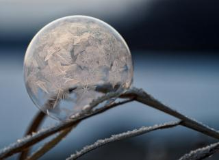 On a bare, frozen branch, a bubble forms frost patterns