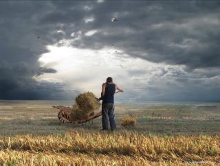 A farmer loads straw onto a wagon, in a golden field with a cloudy sky behind him