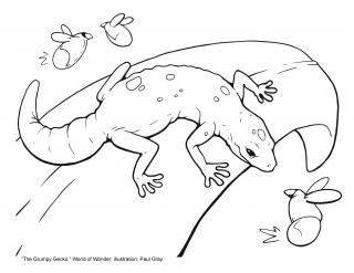 line drawing for coloring of a lizard on a leaf about to eat an insect