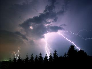 In a night sky, bolts of lightning shoot down towards the silhouette of evergreen trees.