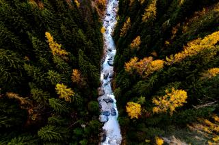 From above, a river cuts through an evergreen forest