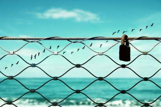 Against a backdrop of blue sky and ocean, a line of birds flies past a padlock attached to a fence.