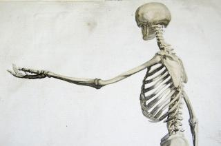 Upper skeleton from line engraving of walking skeleton from Andrew Bell's Anatomia Britannica (1770s-1780s)