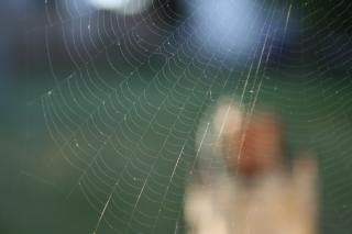 A delicate spider web stretches across the frame, as a blurred person is visible in the background.