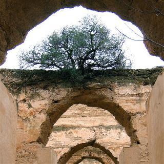 Tree_rooted_in_rock_arch_hope-Flickr