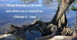 Tree roots by water with Odell quote