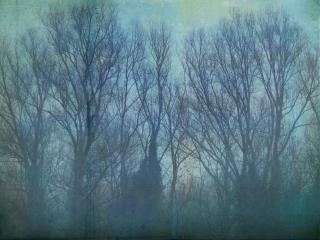 Bare trees reach to a grey sky