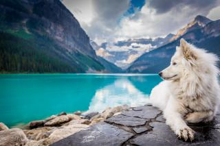 A fluffy white dog sits overlooking a blue lake, with towering mountains behind.