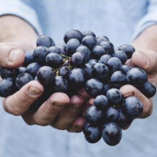 Hands holding a bunch of grapes