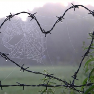 Heart-shaped barbed wire with a spider web in the center