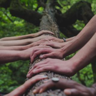 multiple pairs of hands rest on the trunk of a tree