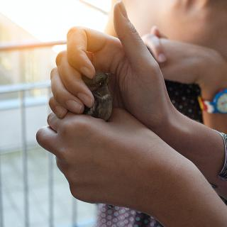 Image of hands holding a baby bird