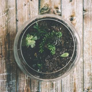 photo of round glass terrarium