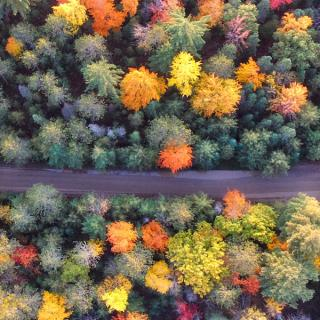 Aerial view of forest in autumn with a road passing through