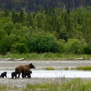 A mother bear with three bear cubs, on a river bank.