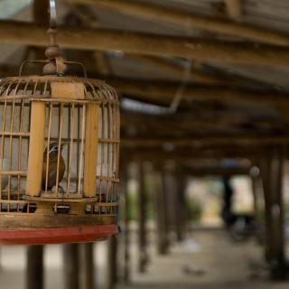 Bird in a birdcage.