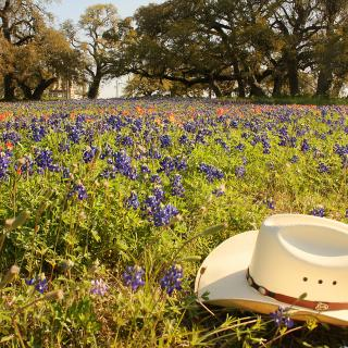 A cream-colored cowboy hat rests on a Texas meadow filled with bluebonnets