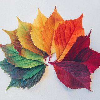An array, fan-like, of leaves ranging from green to gold to rust to red.