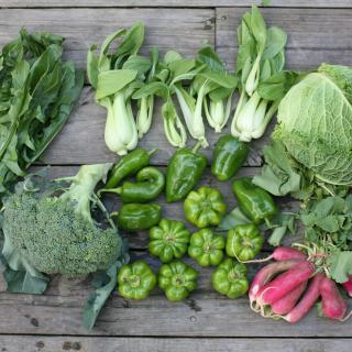 fresh produce arranged on a table, viewed form above: broccoli, cabbage, green peppers, bok choy, and radishes