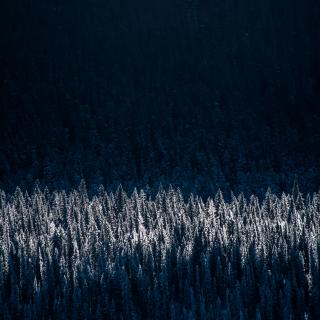 Moonlight shines down on a thick forest of evergreen trees, dusted with snow