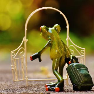 Frog with a rollerbag going through an archway