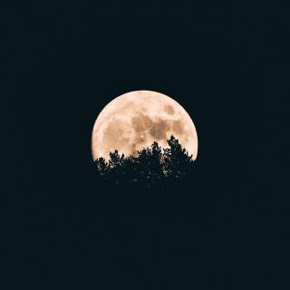A full moon rises behind the silhouette of trees