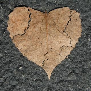 Heart-shaped dead leaf on pavement