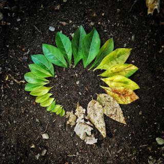 A ring of leaves: from small green leaves, to large green ones, to yellowing leaves, to dry leaves.