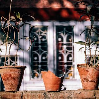Photo of three clay plant pots, the center one is broken.
