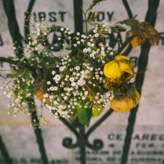 A posy of fading yellow roses is tied to the iron gate in front of a grave or memorial stone.