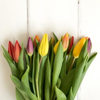 colorful tulips, not yet in full bloom, lying on a white table