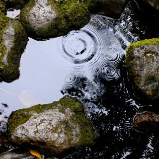 Rain drops make small ripples on a pool of water contained by mossy rocks.