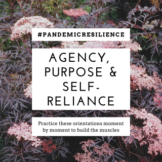 picture of an elderberry bush with the words agency, purpose and self-reliance