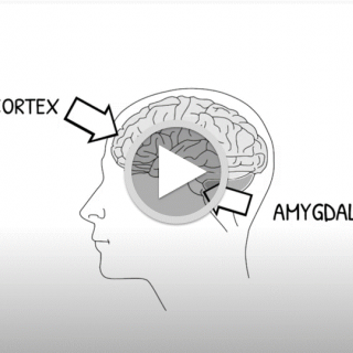 Image showing the frontal cortex and amygdala