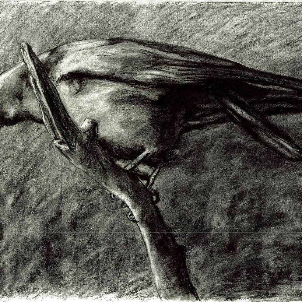 charcoal on paper drawing of a bird. Black and white.
